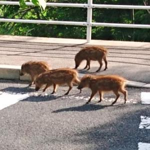 【小動物】ウリ坊 朝の散歩です~♪