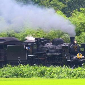 【鉄道写真】SLやまぐち号初列車C571が徳佐の水田地帯を走る!