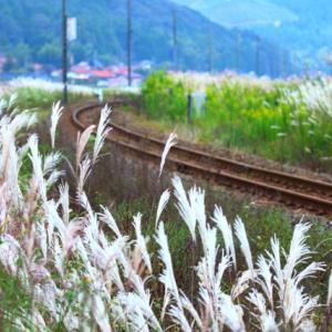 【鉄道写真】秋のキハ40-2042気動車がススキの中を行く~♪