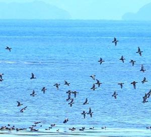 【野鳥】冬鳥の飛来!(門前川)