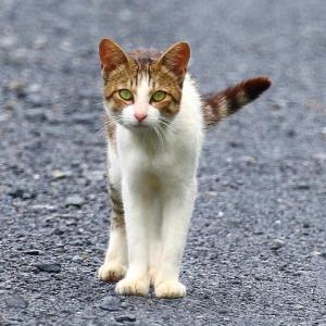【小動物】可愛い猫~♪