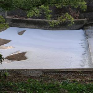 川一面に大量の泡が・・・(周南市西光寺川)