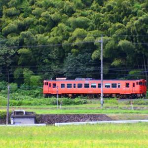 【鉄道写真】黄金の海を行く山口線キハ40朱色気動車