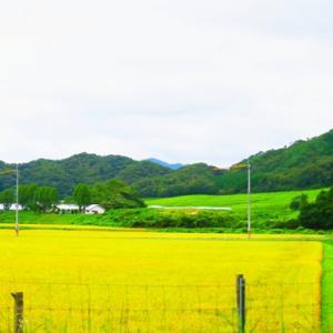 【風景】船方牧場辺りから十種ヶ峰の秋~♪