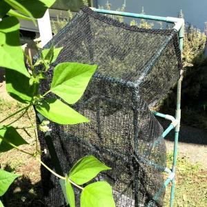 今年は2回目キュウリ栽培するよ 苗作り用の日除け