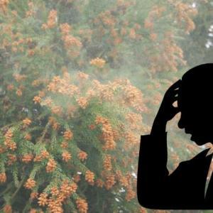 花粉症と日本のスギ多すぎ問題-スギの歴史と悪化する花粉飛散量-