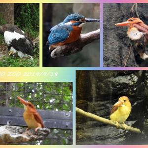 上野動物園で6年振りの再会