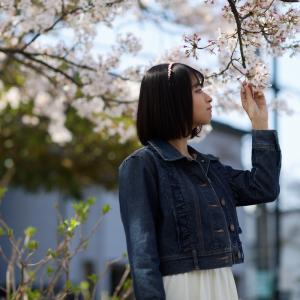 COCOROちゃん その27 ─ 桜よ咲いてよ咲いて咲いてお散歩撮影会2021 ─