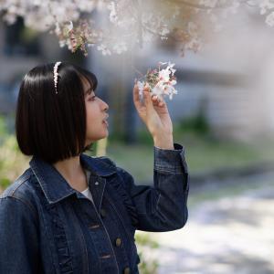 COCOROちゃん その28 ─ 桜よ咲いてよ咲いて咲いてお散歩撮影会2021 ─