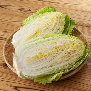 【白菜】栄養と効能、美味しい白菜の選び方!