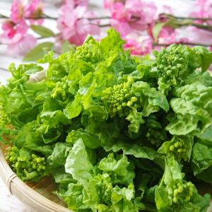 春野菜を食べよう!春野菜の栄養と効果