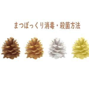 【実験】松ぼっくりの殺菌消毒方法6つ  虫対策に簡単な処理方法は?
