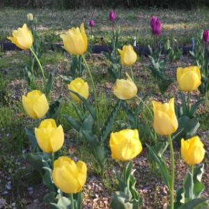 新城総合公園の花々