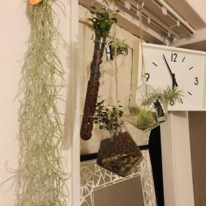 【デスク周り】観葉植物も「浮かせる」ことで掃除を楽に【グリーンが欲しい】