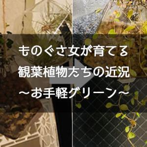 【エアプランツ】ズボラ女が育てる観葉植物の近況【ハイドロカルチャー】
