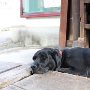 【シニア犬にオススメのドッグフード4選】 選ぶときの注意点は?