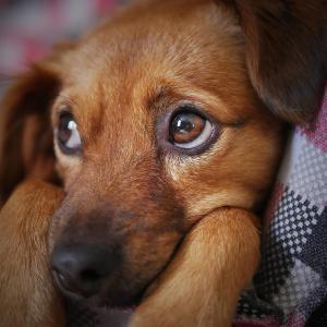 『犬のアレルギーと抑えておくべき食事の5つの注意点』