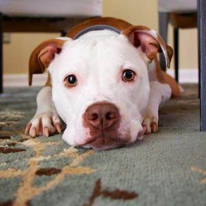 犬の嘔吐や下痢は食事が原因だった⁉︎ 原因に合わせた対処法をご紹介