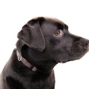 【緊急】犬にチョコレートは危険⁉︎ 愛犬に食べさせてはいけない食べ物