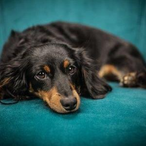 犬の避妊手術はするべき⁉しないという選択のメリット、デメリット