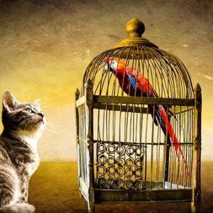 ジモティーはトラブル多い⁈ペットの里親になる為に心得ておきたい事