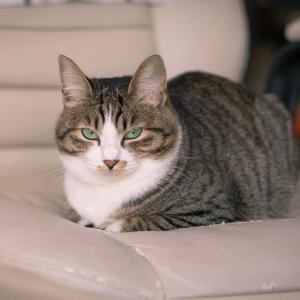 猫動画で癒されたい!猫YOUTUBEおすすめチャンネル5つ!