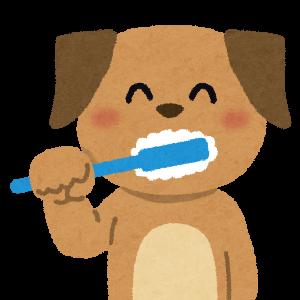 トイプードルの歯磨きで小さな歯と命を守れ!気を付けるべき3つのポイント