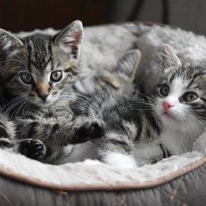 子猫の留守番はいつから大丈夫?初めての留守番の時期や注意すべき事