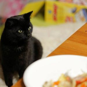 え、ダメだったの⁈猫に与えてはいけない意外な食べ物まとめ