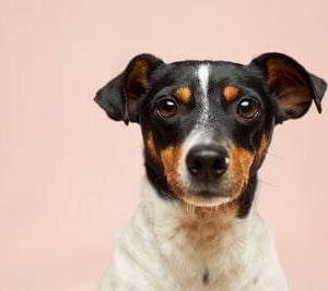 愛犬がご飯を食べない…犬の為に消化にいい食べ物と与え方4選!