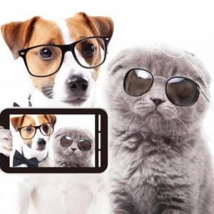 写真を撮ると犬の目が光る仕組み。フラッシュは網膜剥離になる!?
