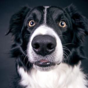 これって病気?!愛犬の目の色が変わったときに心配な4つの病気