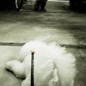 遠山の猫ちゃん