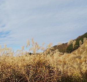 曽爾高原に来ています。