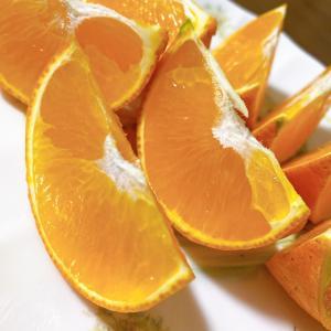 愛媛県の高級みかん「紅まどんな」はジューシーで甘く、今年出会った中で最高の果物!
