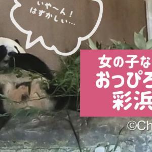 【パンダ】アドベンチャーワールドのパンダたちが可愛すぎる😆