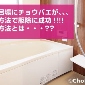 【お風呂場にチョウバエ発生!】そんな時の対応方法