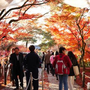 ああ、紅葉の京都に行きたい!