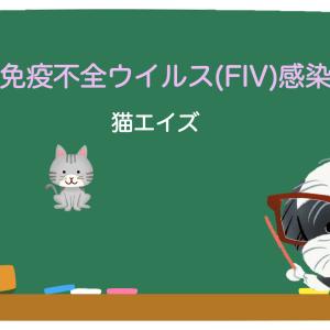 猫免疫不全ウイルス(FIV)感染症/猫エイズ