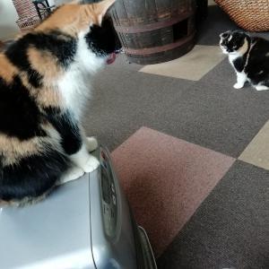カワイイ猫ちゃんがいっぱい^^猫カフェに行ってきました!
