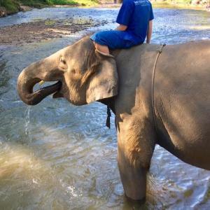 おうちにいながら、タイの森を象さんと散歩