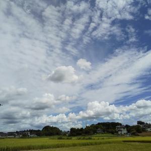 原田メソッドチャレンジカップ 今週のあゆみ(9月9日~15日)