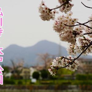 静かに、安全に・・・半日の桜満喫ドライブ記