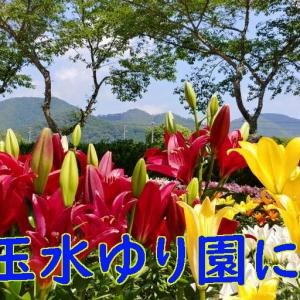 丹波篠山玉水ゆり園にて