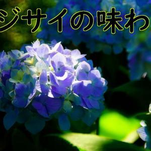 あじさいの花を楽しむ
