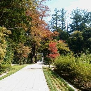 10月8日(火曜日) 漢方講座開催します