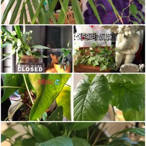 黙々と観葉植物と、、
