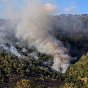 オーストラリアのユーカリの木が自然発火で山火事は常識という事実