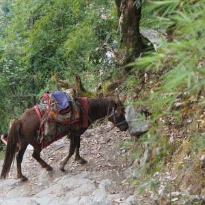 子連れでヒマラヤ登山!アナプルナベースキャンプトレッキング(1):驚異のウレリ階段!