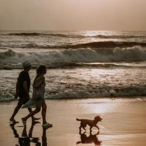 愛犬との別れから・・激動の日々